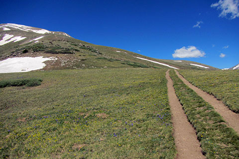 two tracks crossing the alpine tundra to the east ridge of Mount Elbert