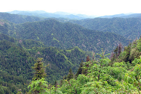 Overlook near the summit of Mount Le Conte