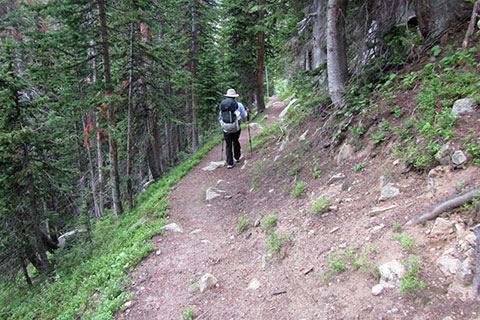 HIker moves across a sloping trail in trees