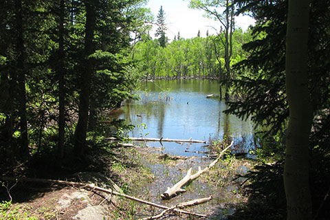 pond along the trail
