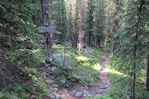 Side trail to Timber Creek Campsite