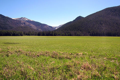 view of the green grass of Big Meadow