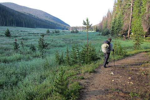 Hiker on trail next to Big Meadow