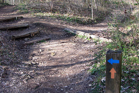 Harpeth Woods Trail in Edwin Warner Park