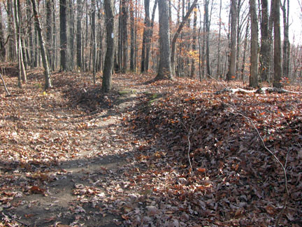 Trail leaving old wagon road