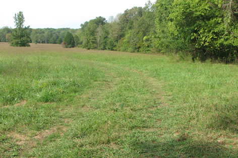 road starting into the field